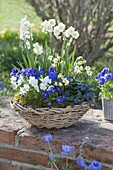 Blue-white spring basket on the wall
