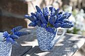 Small posy of Muscari armeniacum in cup