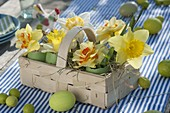 Easter table decoration with narcissus on the terrace