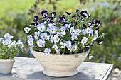 Bowl with viola cornuta (horn violet)