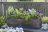 Wooden box with herbs and edible flowers