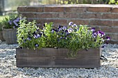 Wooden box with herbs and edible flowers on gravel terrace