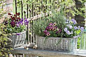 Baskets with edible flowers and herbs