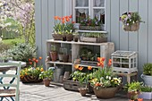 Spring terrace with tulips, viola and vegetable plants