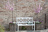 Almond trees in baskets and white bench in front of brick wall
