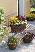 Baskets with viola cornuta, erysimum and oregano