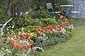 Spring bed with Tulipa 'Ballerina', Erysimum