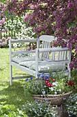 White bench under blooming malus, basket with viola cornuta