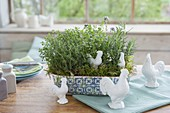 Ceramic box with thyme, savory and rosemary
