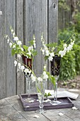 Dicentra 'Alba' (White Bleeding Heart) in champagne flutes