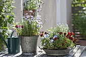 Zink pot and bowl with Viola cornuta, chives