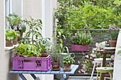 Small vegetable garden on the balcony