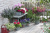 Terrace with balcony flowers and herb shrub basil 'African Blue'
