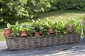 Basket with herbs, pots as signs