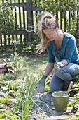 Woman is sprinkling lime in the vegetable garden