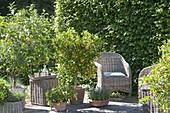 Fragrance terrace with Citrus limon, Citrofortunella microcarpa
