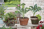 Strawberries in the basket box and broccoli in clay pots
