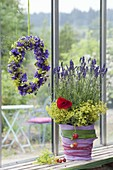 Lavender in pot with felt cover, Alchemilla flowers