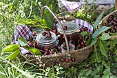 Basket of freshly picked and preserved cherries (Prunus)