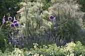 Allium giganteum, Bronze fennel 'Rubrum'