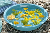 Turquoise shell with yellow flowers floating in the water