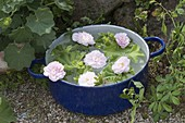 Blue enamel pot as a floating bowl with Rosa 'Stanwell flowers