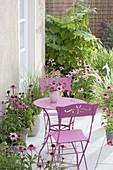 Small terrace with Echinacea purpurea, grasses