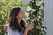 Woman enjoys the sweet scent of Stephanotis floribunda