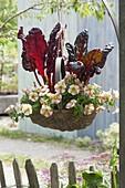 Basket hanging on pergola-Mangold 'Feurio'
