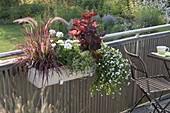 Balcony box with Pennisetum setaceum 'Fireworks'