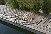 Spiral of pebbles laid on boardwalk at the swimming pond