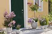 House entrance with pink flowering plants, Lagerstroemia indica