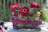 Unusual arrangement in glass jardiniere-Zinnia, Swiss chard