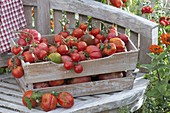 Freshly picked tomatoes in wooden box