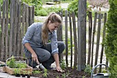 Create a bed of annual summer flowers