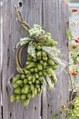 Wreath of hop vine, hop umbels laterally bound in grape