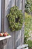Humulus lupulus (hops) wreath on board wall
