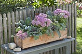 Homemade wooden box planted autumn