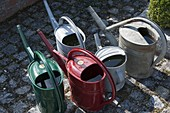 Place filled watering cans in the sun to warm the water