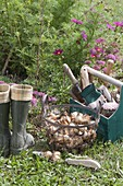 As from September it's planting time for flower bulbs