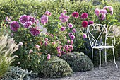 Seating area at the rose pink bed with dahlia, roses