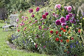 Colorful bed with summer flowers and perennials