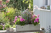 Self made wooden box planted with pink and blue pelargonium