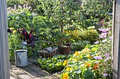 Cottage garden in late summer with fruits, vegetables and summer flowers