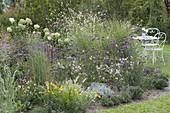 Flowerbed with perennials, grasses and herbs, Verbena bonariensis