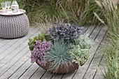 Bowl with Sedum spurium, Sedum cautiolum (Stonecrop), Festuca