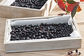 Black berries of aronia-apple-berry to dry