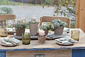 Table decoration with succulents in the conservatory