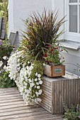 Wooden box with Petunia Surfinia 'Snow' (petunia), Pennisetum