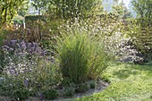 Prairie set with Gaura (Lindheimer's beeblossom), Verbena bonariensis